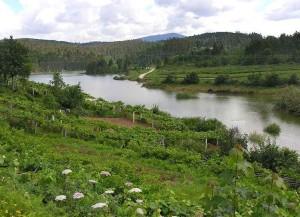 Río Umia